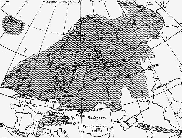 Н.Р. Гусева ''Русский Север